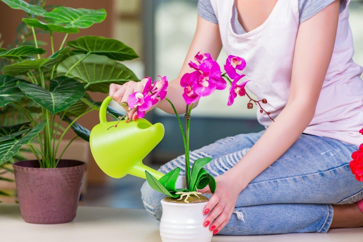 Советы по уходу за комнатными растениями: купание