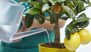 Какая вода лучше всего подходит для комнатных растений?