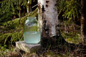 Березовая вода – свойства, действие и применение березовой воды